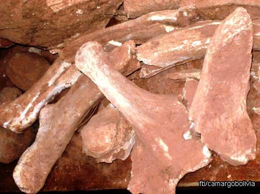 Fósiles de animales pre históricos de considerable tamaño