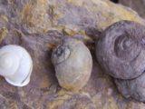 La Paleontología como atractivos turísticos en los Cintis